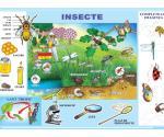 INSECTE / MESERII